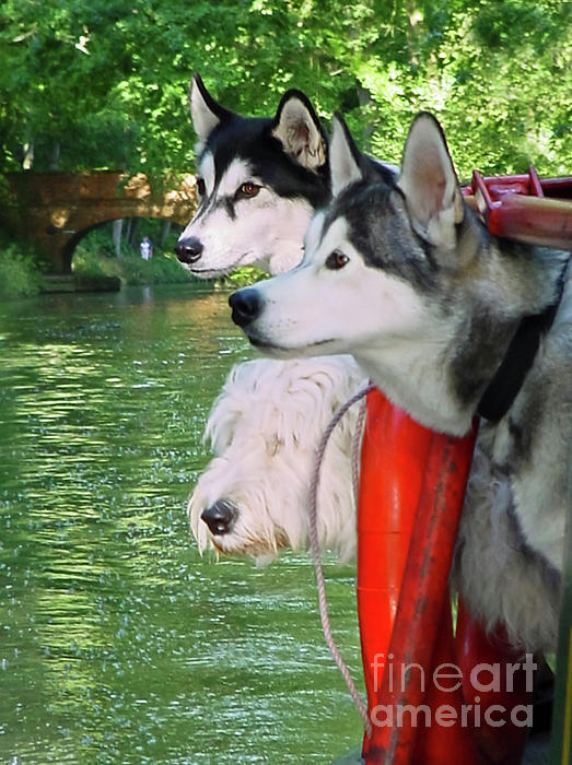 Canal Photograph - Three Dogs On A Boat by Terri Waters
