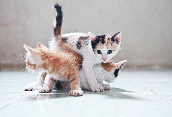 Horizontal Photograph - Three Kittens by Photos by Andy Le