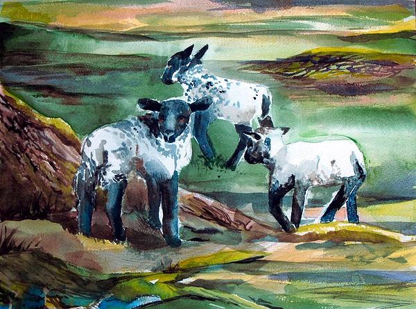 Lambs Painting - Three Lambs by Mindy Newman