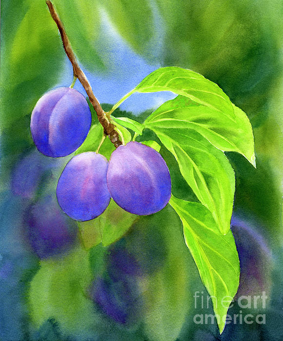 Purple Painting - Three Purple Plums With Background by Sharon Freeman