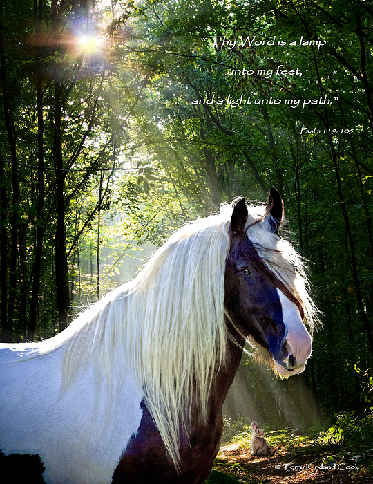 Equine Photograph - Thy Word Is by Terry Kirkland Cook