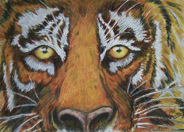 Wildlife Painting - Tiger Eyes by Patricia R Moore