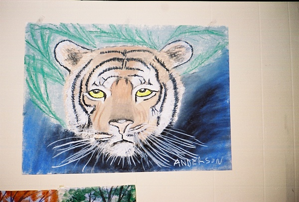 Big Cat Pastel - Tiger by Geanene Anderson