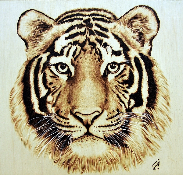 Tiger Pyrography By Ilaria Andreucci