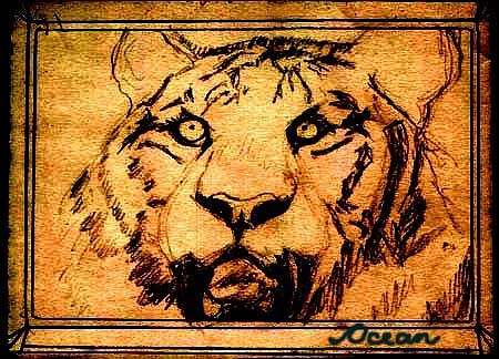 Ocean Drawing - Tiger In Golden Tones And Sepia by Ocean