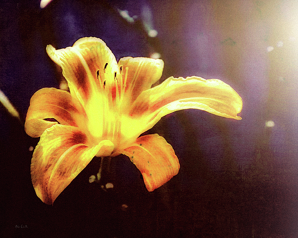 Flowers Photograph - Tiger Lily On Waters Edge by Bob Orsillo