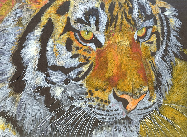 Tiger Drawing - Tigress by Angela   Cater
