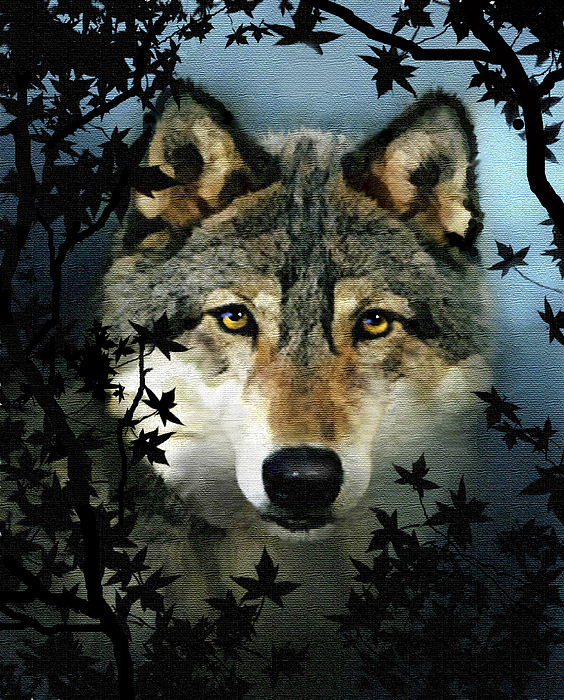 Wolf Painting - Timber Wolf by Robert Foster