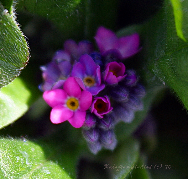 Floral Photograph - Tiny Pinks by KatagramStudios Photography