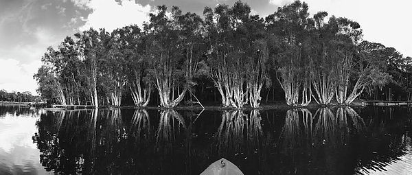 Black And White Photograph - Tip Of The Kayak by Tara Miller