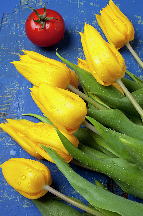 Tulips Photograph - Tomato And Tulips by Garry Gay