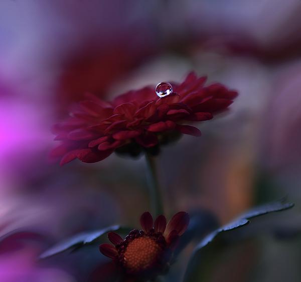 Aesthetic Photograph - Touch... by Juliana Nan