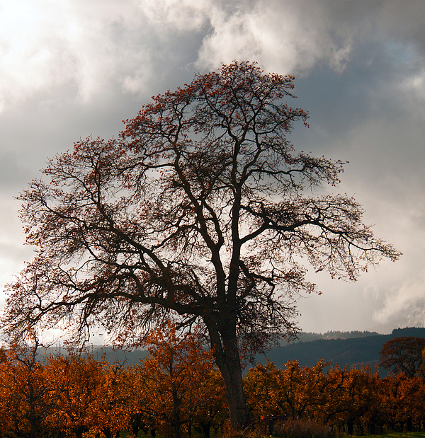 Autumn Photograph - Touch The Sky by Merrill Beck