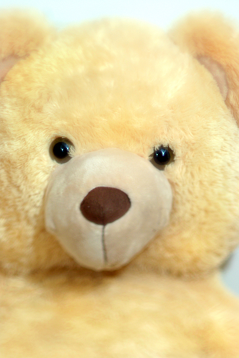 Bear Photograph - Toy Bear-0089 by Sean Shaw