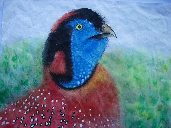 Nature Painting - Tragopan by Jian Hua Li