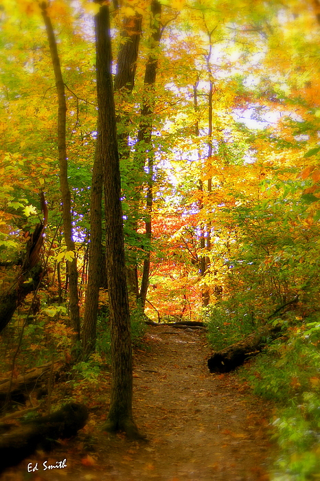 Nature Photograph - Trailhead Light by Ed Smith