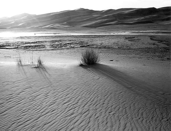 Sand Dunes Photograph - Tranquility by Allan McConnell
