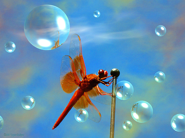 Dragonfly Photograph - Transparent Red Dragonfly by Joyce Dickens