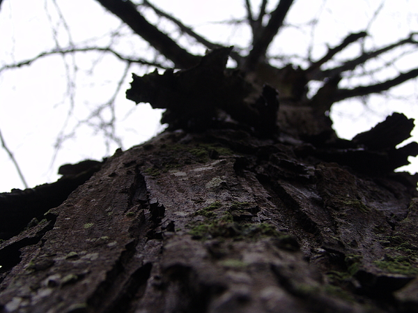 Tree Photograph - Tree 004 by Ryan Vaal