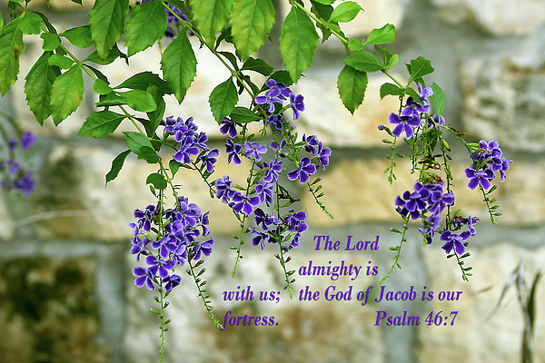 Tree branches with purple flowers ps46 v 7 photograph by linda phelps scripture photograph tree branches with purple flowers ps46 v 7 by linda phelps mightylinksfo