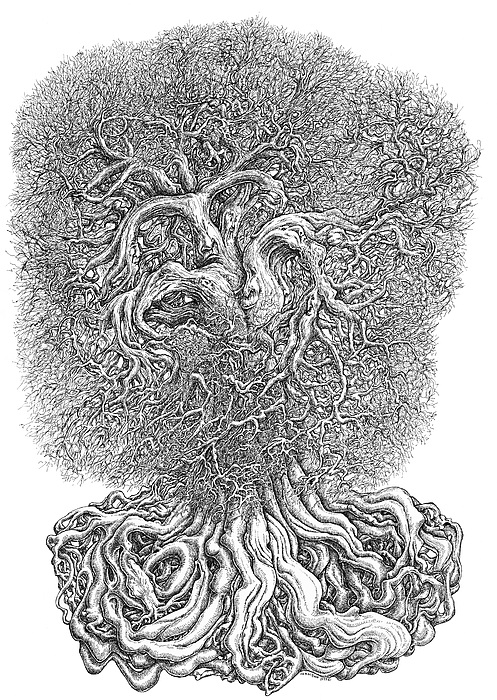 Tree Drawing by Joe MacGown