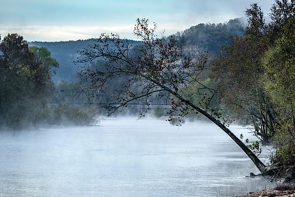 Bridge Photograph - Tree Over Gasconade River by Jae Mishra