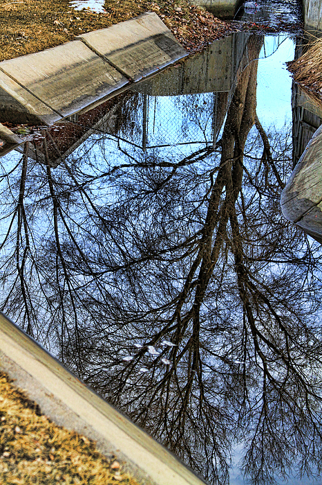Photo Bank Photograph - Tree Reflection From No Where Photography Image by James BO  Insogna