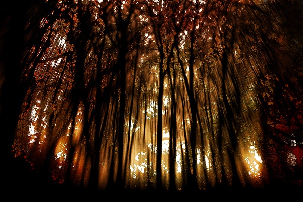 Digital Photography Photograph - Trees 2 by Tony Wood
