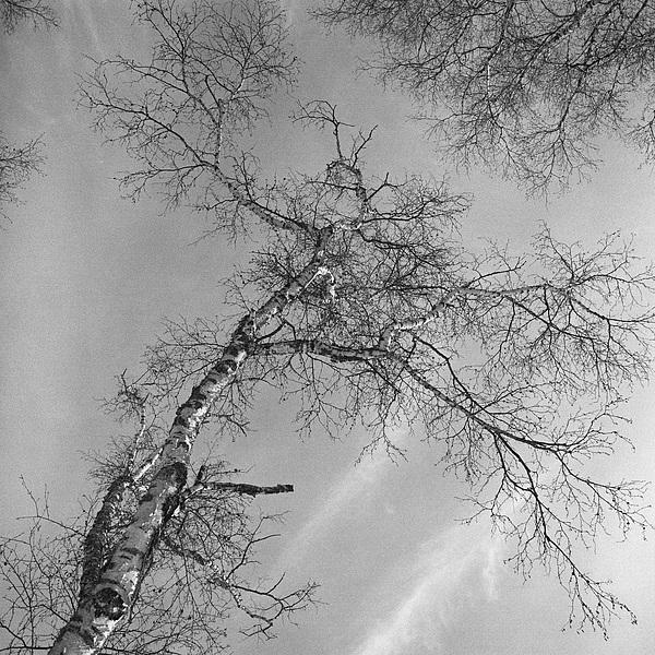 Cloud Photograph - Trees Against Winter by Arni Katz