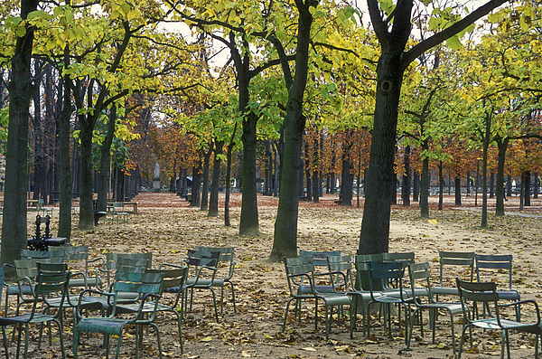 Outdoors Photograph - Trees And Empty Chairs In Autumn by Stephen Sharnoff