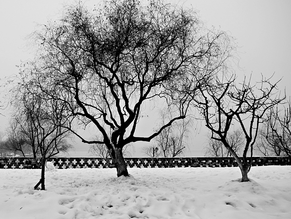 Winter Photograph - Trees In Winter by Dean Harte