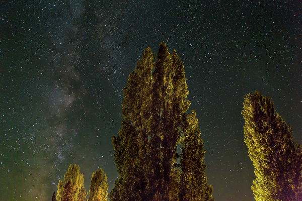 Milky Way Photograph - Trees Under The Milky Way On A Starry Night by David Gn