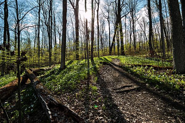 Matt Molloy Photograph - Trillium Trail by Matt Molloy