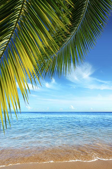 Bay Photograph - Tropical Beach by Carlos Caetano