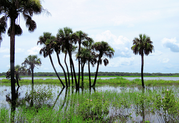 Tropical Photograph - Tropical Flooding by Rosalie Scanlon