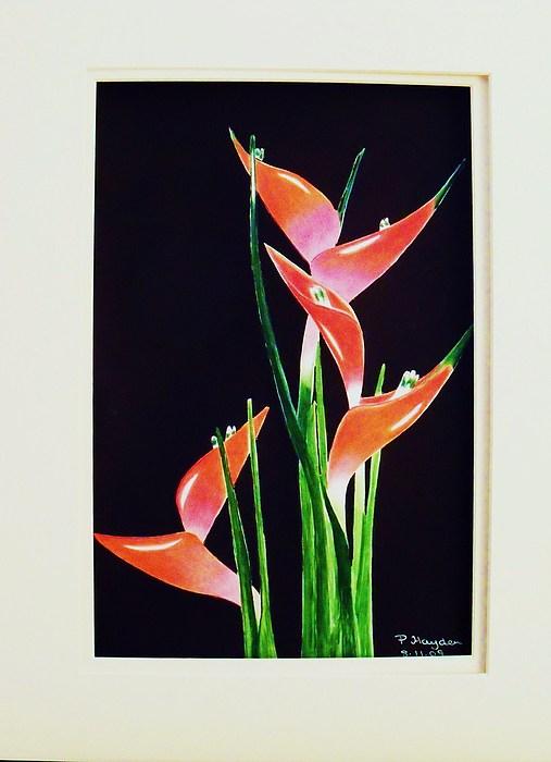 Tropical Flowers Drawing - Tropical Flower Heliconia by Patricia Hayden