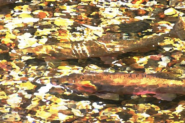 Sun Photograph - Trout Stream by Greg Hammond