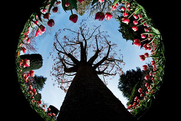 Flora Photograph - Tulip Wonderland L550 by Yoshiki Nakamura