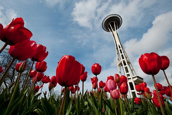 Seattle Photograph - Tulips In Seattle H081 by Yoshiki Nakamura