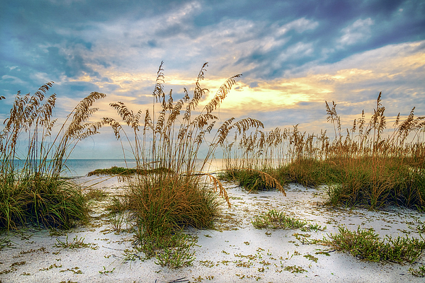 Beach Photograph - Twilight Sea Oats by Steven Sparks