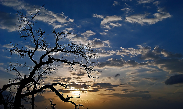 Landscape Photograph - Twisted Sunset by Karl Manteuffel
