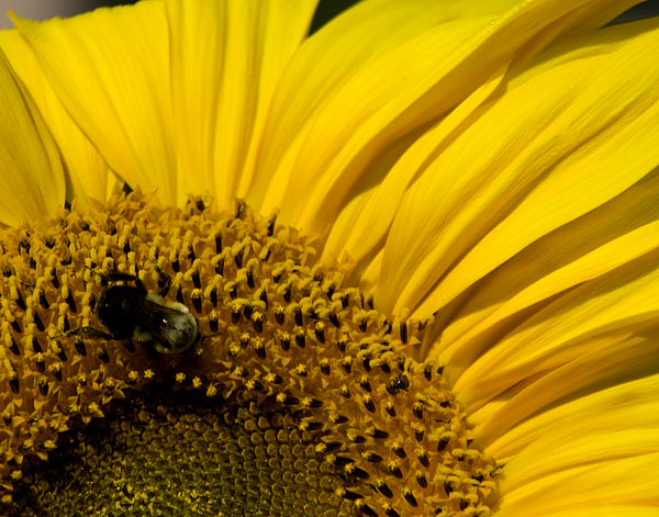 Bee Photograph - Two Bees Or Not Two Bees by Mark Wiley