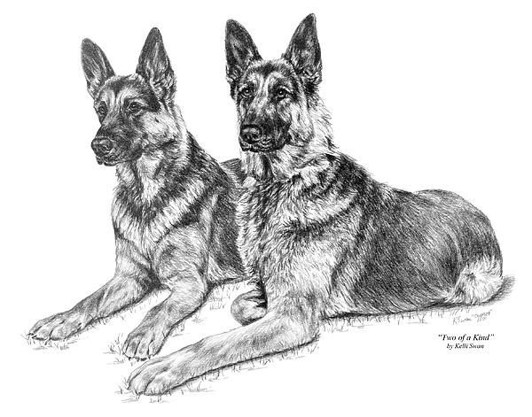 German Drawing - Two Of A Kind - German Shepherd Dogs Print by Kelli Swan