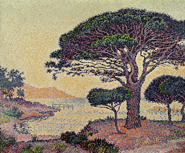 Tree Painting - Umbrella Pines At Caroubiers by Paul Signac