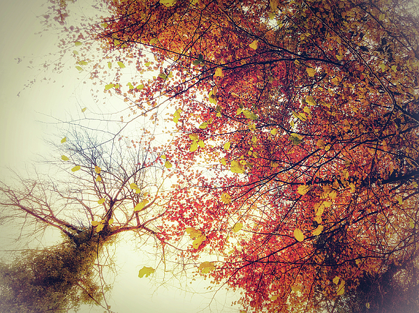 Autumn Photograph - Under An Autumn Sky by Andy Walsh