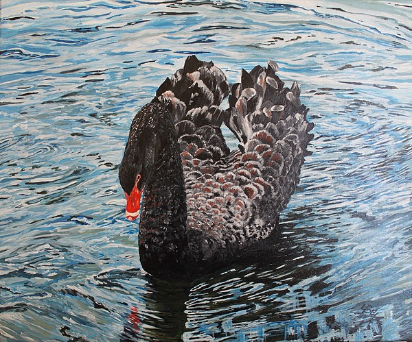 Swan Painting - Under Full Sail Black Swan by Leonie Bell