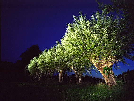 Landscape Photograph - Untitled - Series Night Tree by Markus Redert
