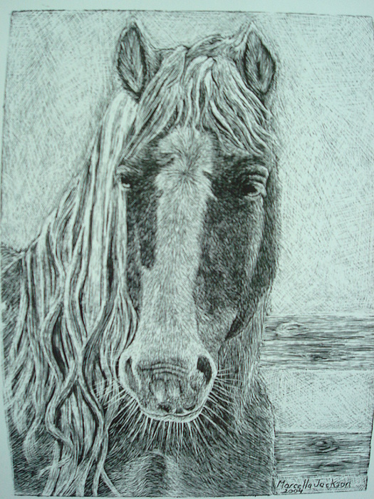 Horse Drawing - Untitled by Marcella Jackson