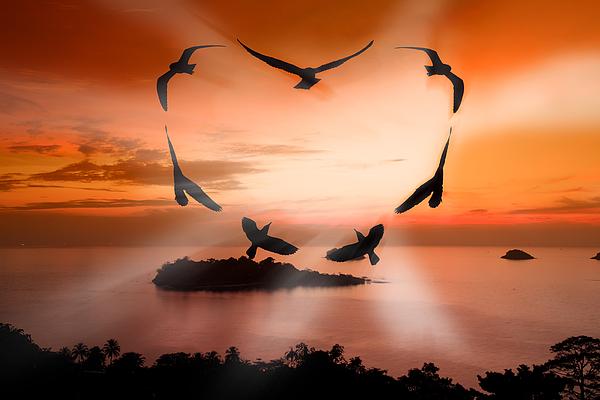 Animal Photograph - Valentine Bird by Anek Suwannaphoom