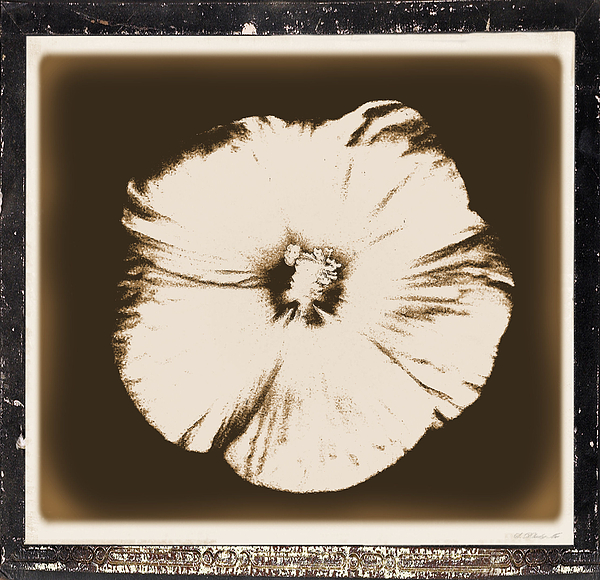 Photo Photograph - Vintage Hibiscus by Marsha Heiken